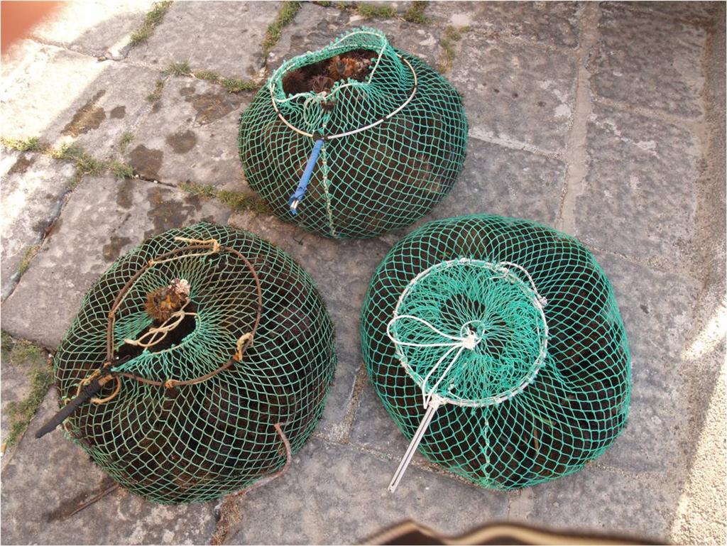 Cattura una quantità di ricci sei volte superiore alla legge: a Torre di Mezzo denunciato pescatore
