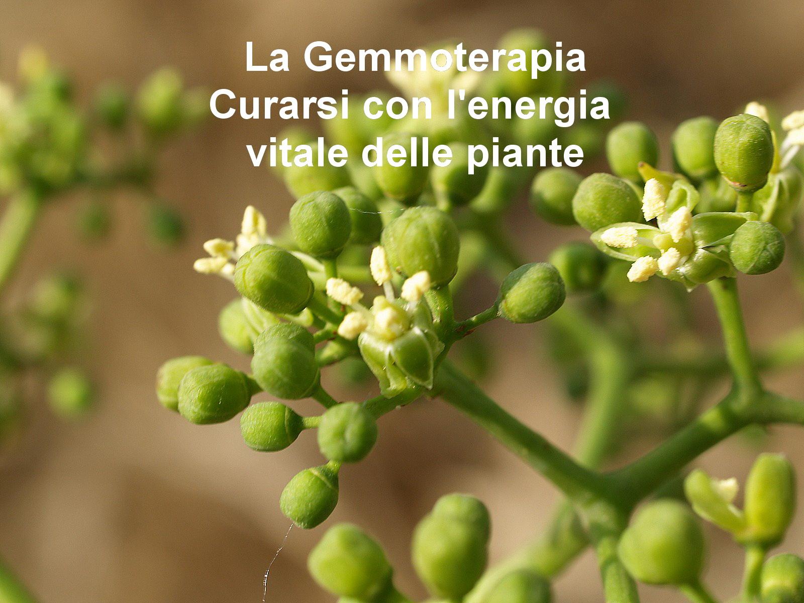 La Merismoterapia depura organi e apparati grazie all'uso di estratti vegetali MEDICINA NATURALE