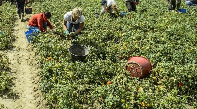 Novità dall'Espresso sulle donne sfruttate nei campi. E la Provincia si mobilita con la solidarietà