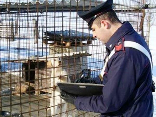Ragusa – Ragazzino azzannato al volto da un cane in un parco pubblico, intervengono i carabinieri