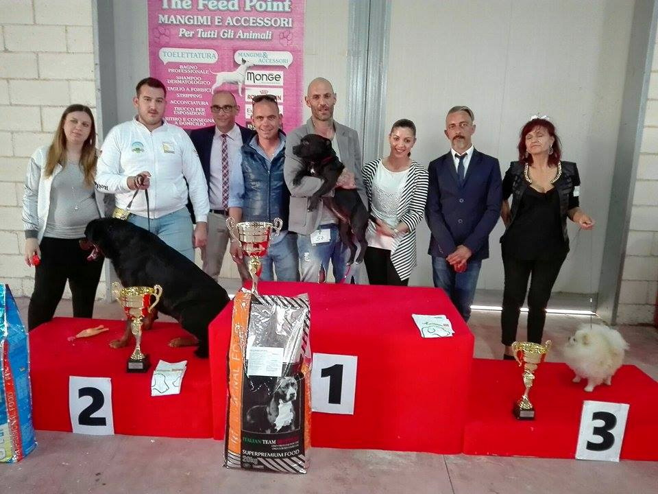 La quarta edizione della mostra cinofila per 230 cani: guarda foto e video