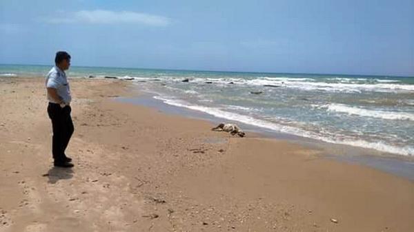 Caucana, rinvenuta carcassa di animale sulla spiaggia delle Anticaglie