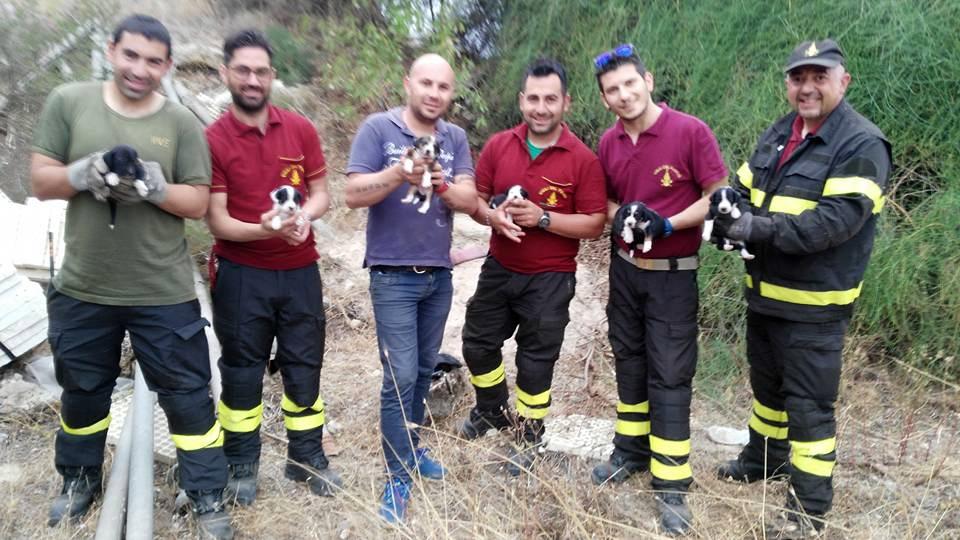 Il fiuto dell'Enpa di Santa Croce: salvata cucciolata in c.da Porcospino