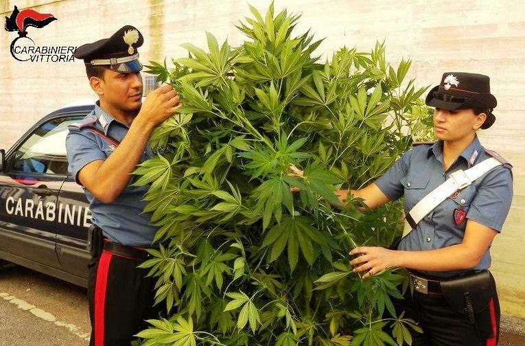 Chiaramonte – Pensionato coltiva piante di marijuana nell'orto: arrestato dai carabinieri.