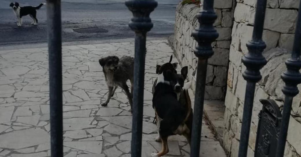"""Cani randagi, paura in via Fleming. Pluchino: """"Non possiamo uscire di casa"""""""