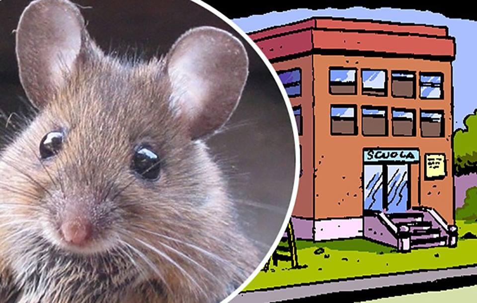 """""""A scuola ci sono i topi. Da prima di Natale"""": la denuncia di Liberi di Scegliere"""