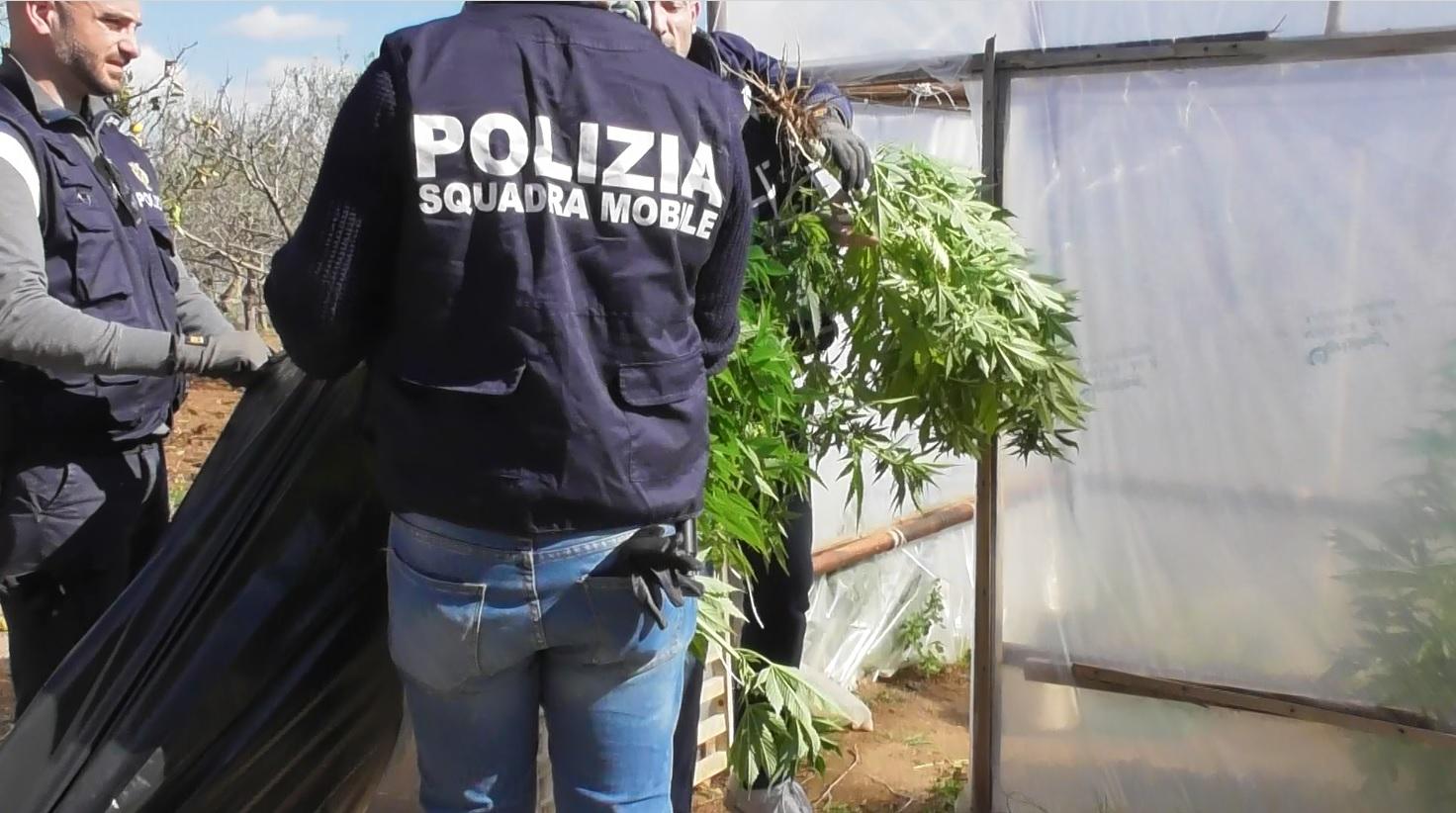 Padre e figlio spacciatori: arrestati a Vittoria, sequestrata una serra