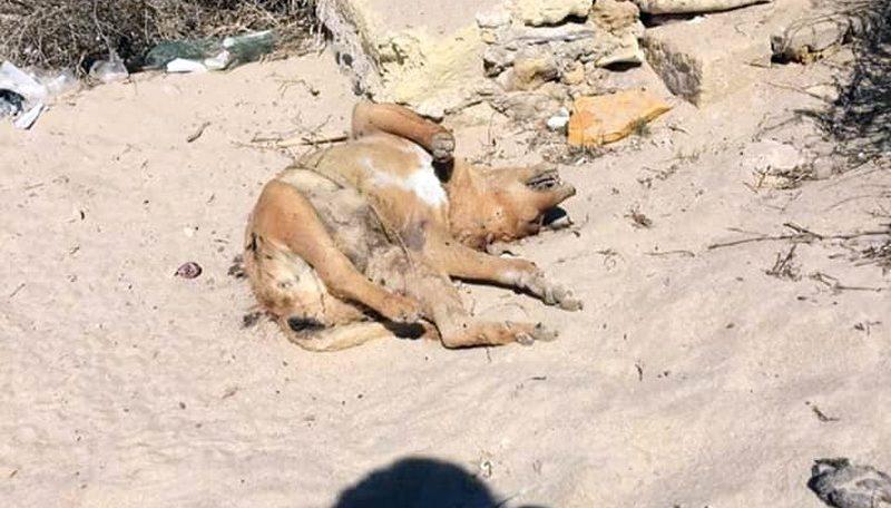P.Braccetto, orrore contro gli animali: un randagio trovato morto