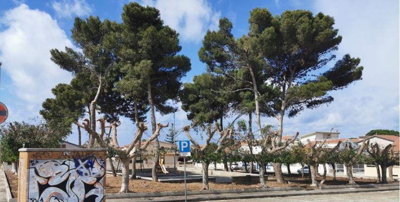 Si interviene sul verde a Caucana: sistemati alberi di piazza Naxos