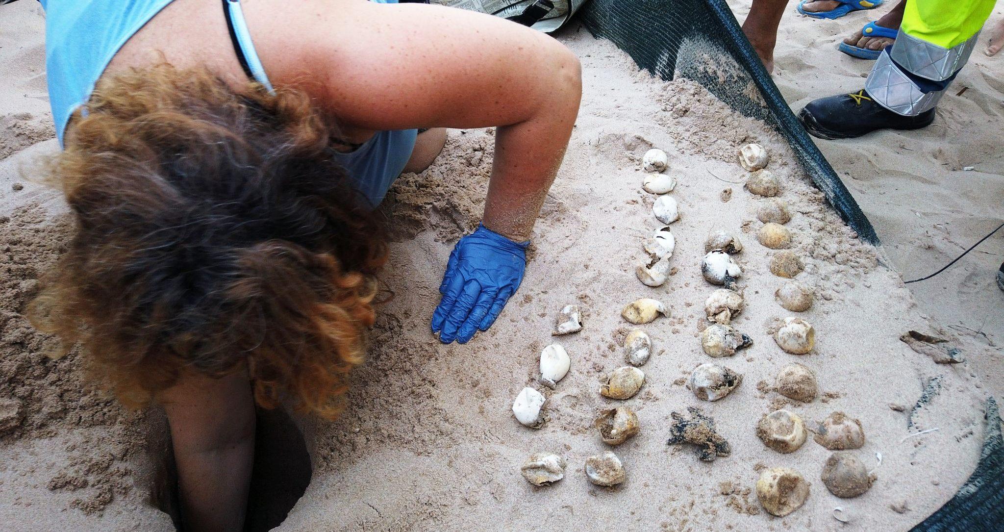 Completata l'ispezione ai due nidi di Casuzze: schiuse 100 tartarughe